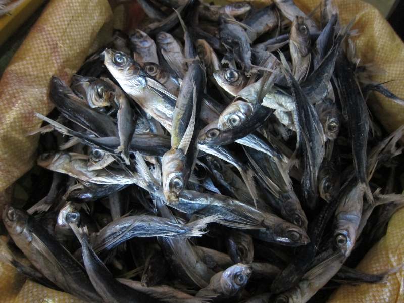 08 dried fish
